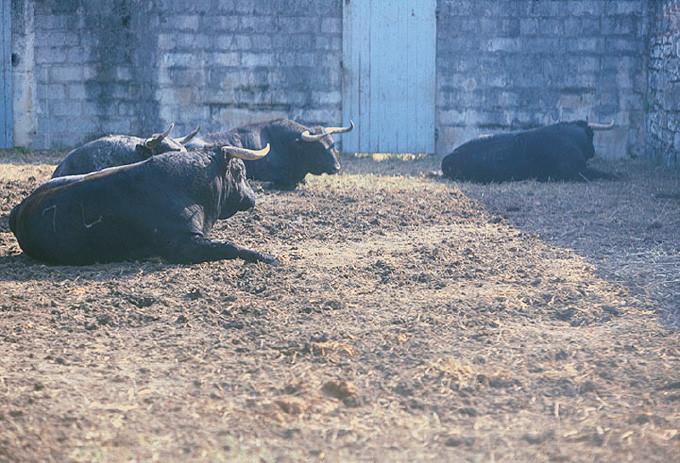 Sitting-Bulls