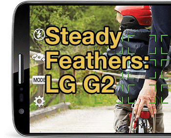 steady-feathers