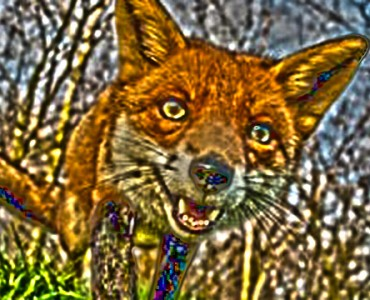 fox-portrait-930x360