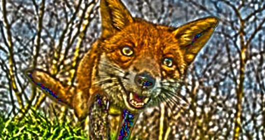 fox-portrait-930x360